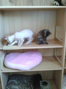 Sunny und Soraya vom Hause Jung, German Rex