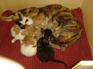 Liefke mit ihren Babys