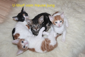 U-Wurf vom Hause Jung
