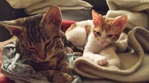 Usko und Uma vom Hause Jung