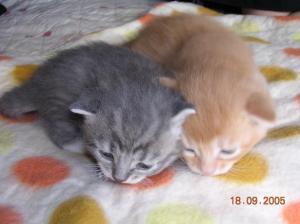 Biko und Berlioz vom Hause Jung