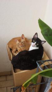 Tizian und Tristan vom Hause Jung, August 2014