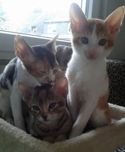 Yasmin, Yumi und Yoda vom Hause Jung