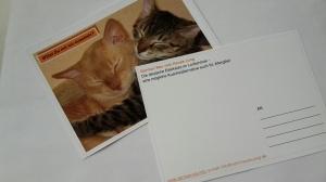 German Rex vom Hause Jung, Postkarten