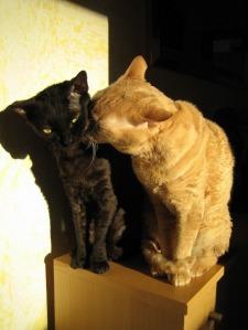 Nuri und Jasper vom Hause Jung