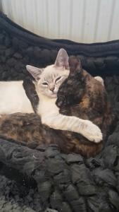 Bibi und Caitlin